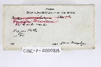 Hypoxylon fragiforme image