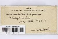 Image of Hymenochaete fuliginosum