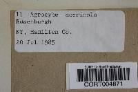 Agrocybe acericola image