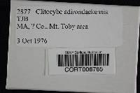 Image of Clitocybe adirondackensis