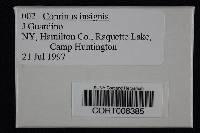 Image of Coprinopsis insignis
