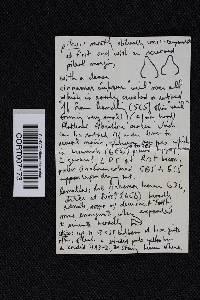 Cortinarius distans image