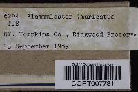 Image of Agaricus muricatus