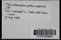 Marasmius pallidocephalus image