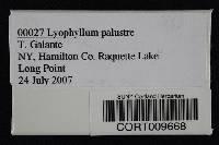 Lyophyllum palustre image