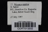 Mycena murina image