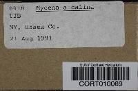 Mycena alcalina image