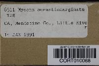 Mycena aurantiomarginata image