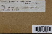 Russula betularum image