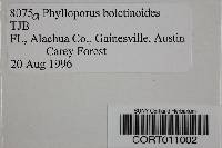 Phylloporus boletinoides image