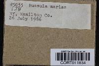 Russula mariae image