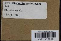 Rhodocybe roseiavellanea image