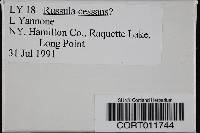 Image of Russula cessans
