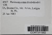 Resinomycena rhododendri image