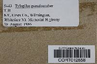 Tylopilus porphyrosporus image