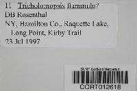 Image of Tricholomopsis flammula