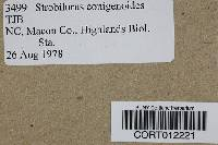 Strobilurus conigenoides image