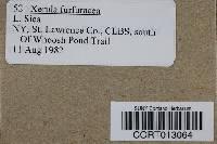 Xerula furfuracea image