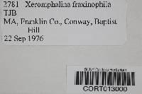 Xeromphalina fraxinophila image