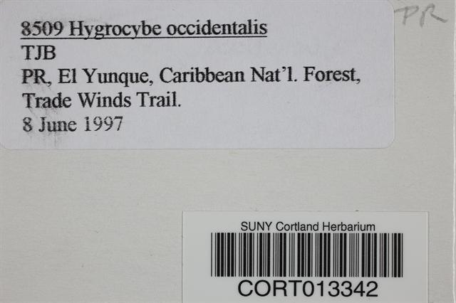 Hygrocybe occidentalis image