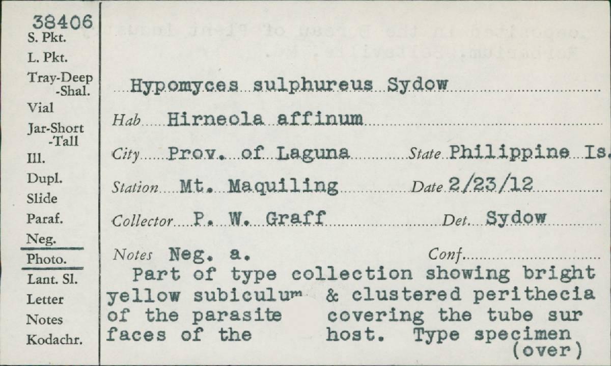 Hypomyces sulphureus image
