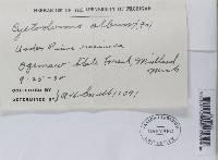 Cystoderma carcharias image