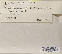 Basidioradulum tuberculatum image