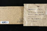 Daedalea quercina image