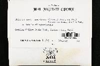 Chlorociboria aeruginosa image