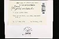 Datronia scutellata image