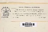 Image of Ramularia coccinea