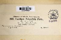 Image of Fusidium petasitidis