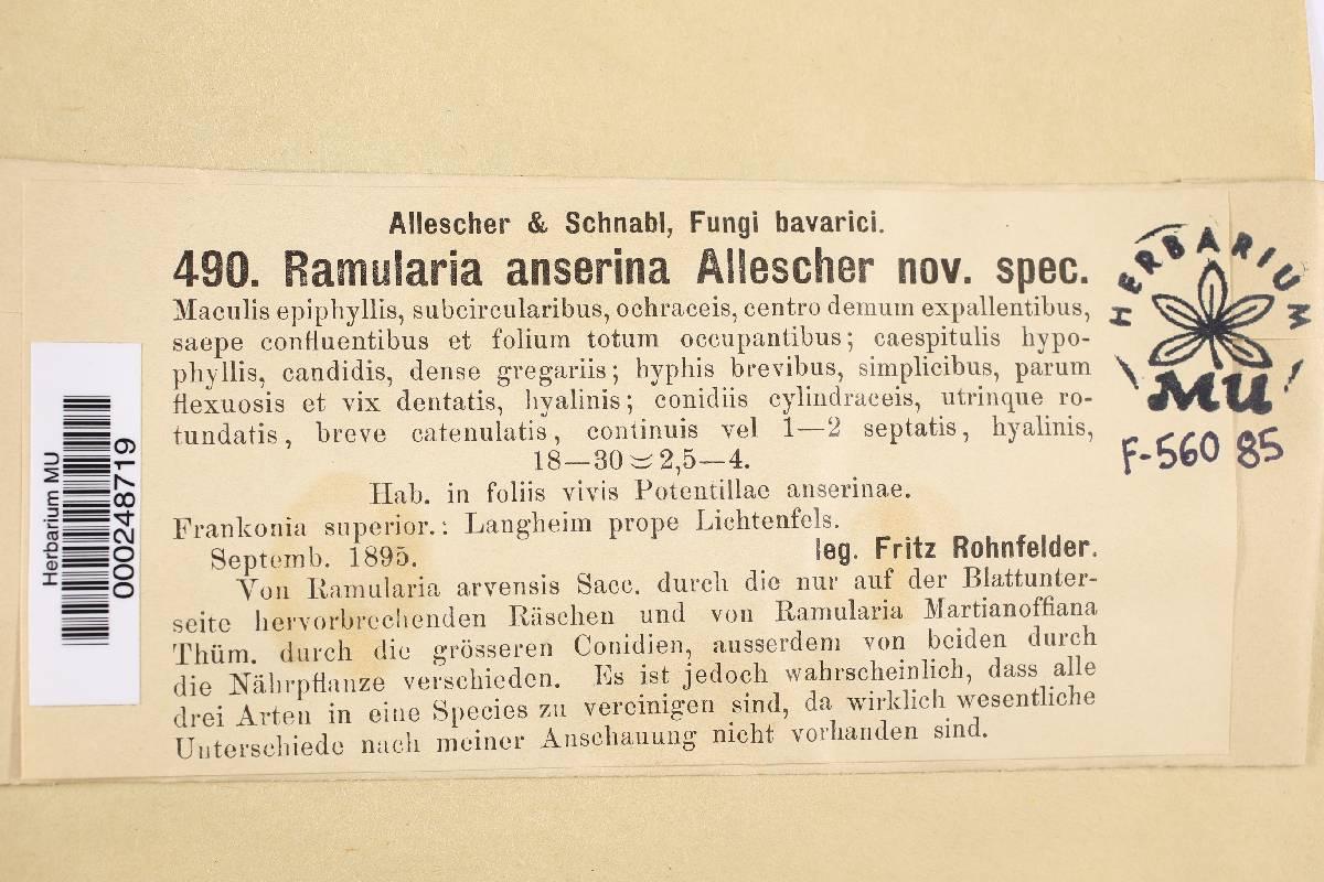 Ramularia anserina image