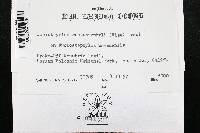 Coniothyrium arctostaphyli image
