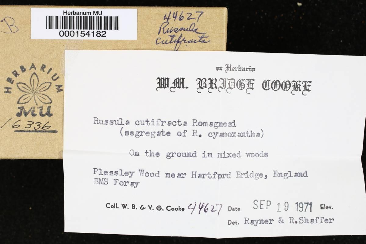 Russula cutifracta image
