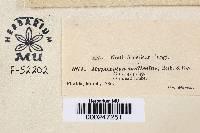 Annulohypoxylon thouarsianum var. thouarsianum image
