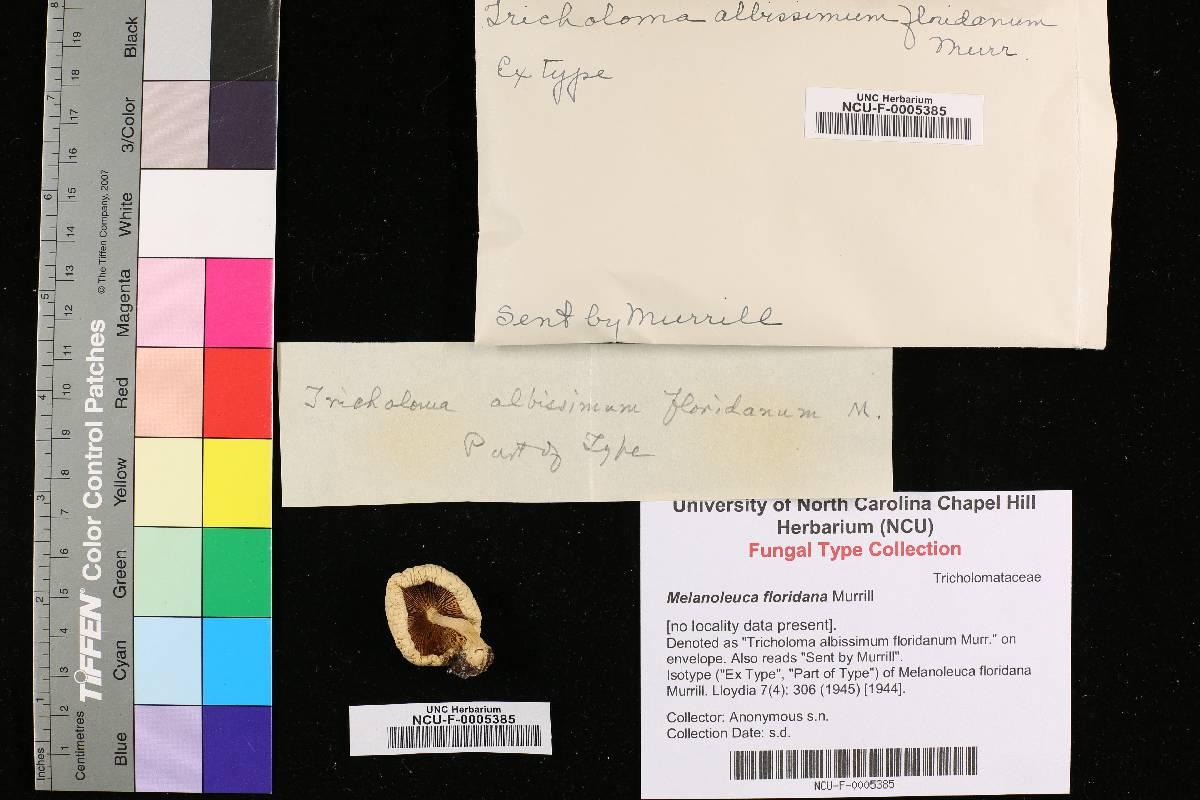 Melanoleuca floridana image
