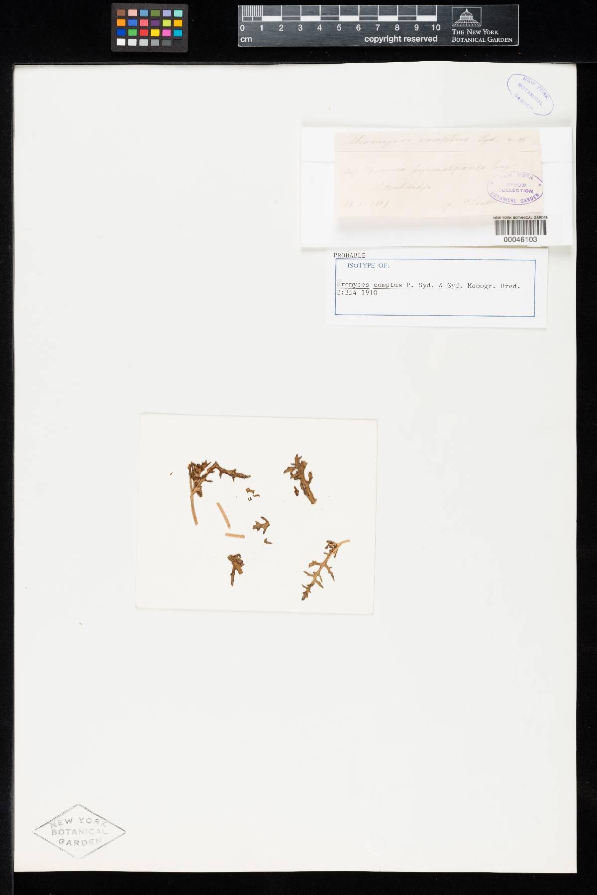 Uromyces comptus image