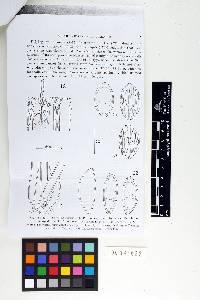 Image of Geopyxis elata