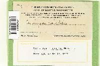Heimioporus mirabilis image