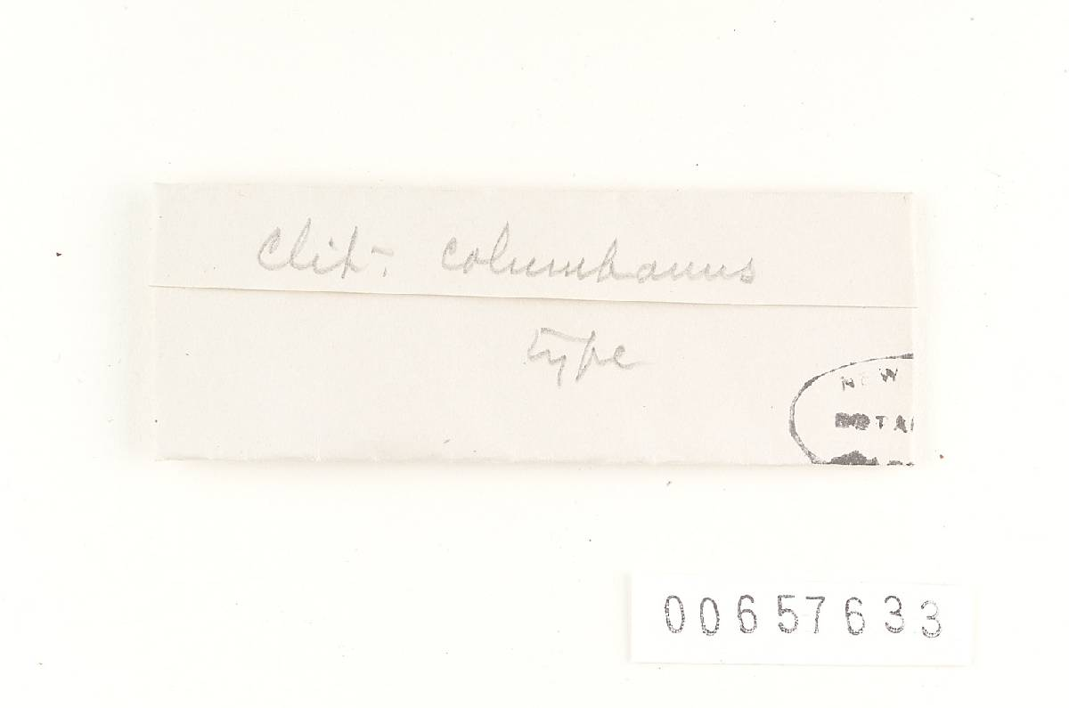 Agaricus columbanus image