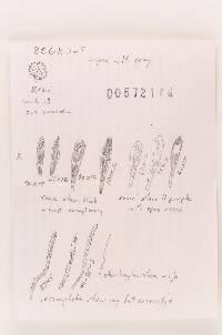 Russula velenovskyi image