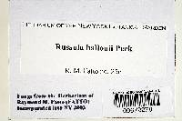 Russula ballouii image