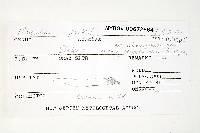 Russula peckii image