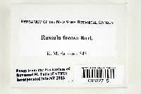 Russula fucosa image
