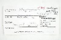 Inocybe tahquamenonensis image