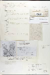 Phellinus sarcites image