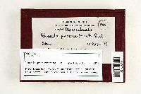 Russula praeumbonata image