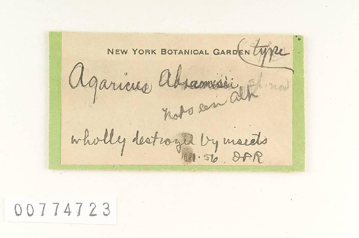 Agaricus abramsii image
