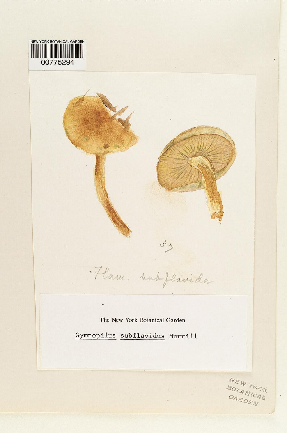 Gymnopilus subflavidus image